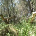 The Meze Dinasour Park